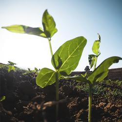 Según experto internacional: El arándano un nuevo cultivo promisorio para los valles de Tarija
